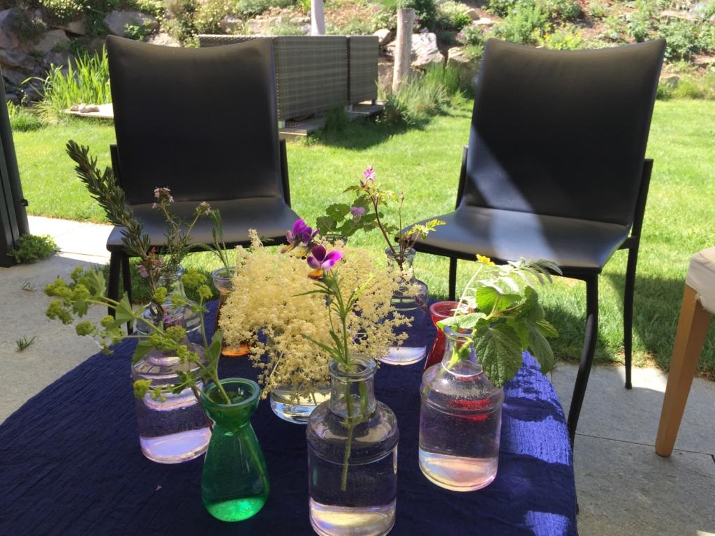 Heilpflanzenkurs